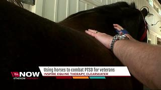 Using horses to combat PTSD for veterans - Video
