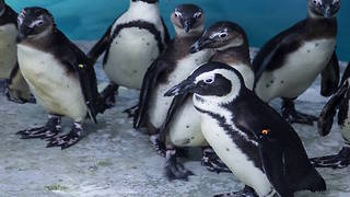 5 things you never knew about penguins - ABC15 DIGITAL - Video