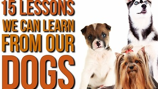 15 Valuable Life Lessons We Should All Learn From Dogs - Video