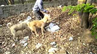 Kind-Hearted Man Feeds Homeless Dogs in South Delhi - Video