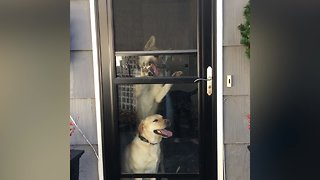 These Crazy Pets can Open Doors!