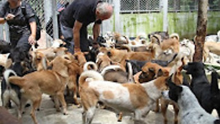 Rescued from the dog meat trade, they're on their way home