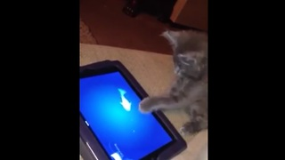 7-week-old kitten has iPad game all figured out!