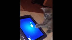 7-week-old kitten has iPad game all figured out! - Video