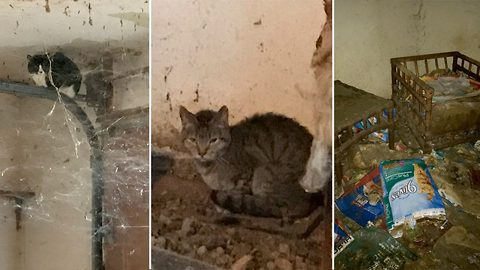 Shocking images from inside house of horrors where volunteers had to crawl through debris to rescue 70 cats