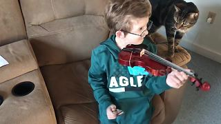 'Curious' cat interrupts boy's violin practice - Video