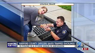 Harford County Officers saves trapped ducklings - Video