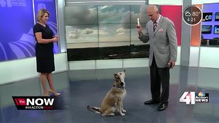 Happy Friday from Sunny the Weather Dog - Video