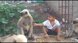 Boy strikes amazing friendship with band of wild monkeys - Video