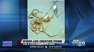 spider-like creature discovered - Video