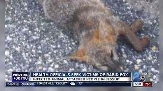 Health officials seek victims of rabid fox - Video