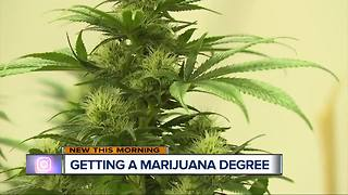 Michigan university could be first offering marijuana-based curriculum - Video
