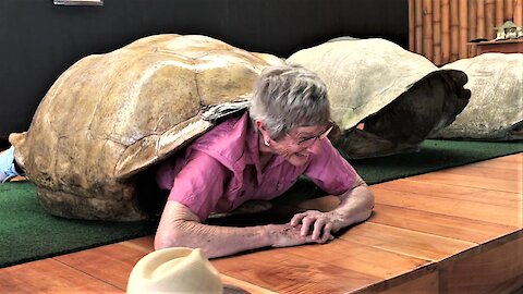 Very inspiring 82-year-old grandma squeezes into giant tortoise shell