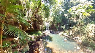 Curtis Falls at Mt Tamborine Gold Coast Hinterland, Australia