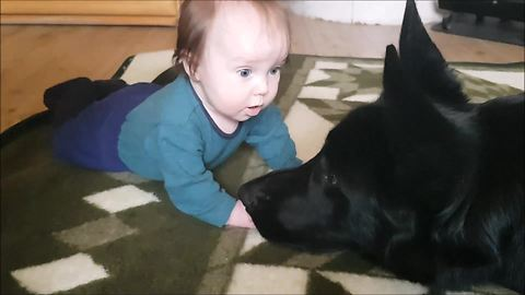 German Shepherd falls in love with baby boy
