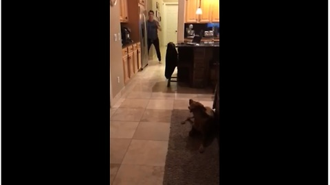 Guy plays hide and seek with his dog