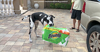 Great Dane has unique style of paper towel delivery