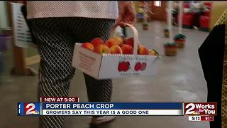 Porter Peachs have great crop so far - Video