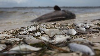 State Of Emergency Declared In Red Tide-Devastated Areas Of Florida