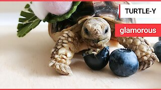 This glamorous tortoise has an extensive Instagram following - and a better wardrobe than you