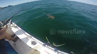 Brit tourist left shocked after his fish is stolen by shark - Video