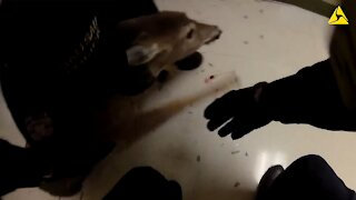 Police Officers rescue deer that crashed through window in nursing home