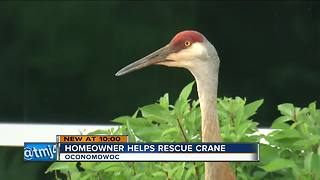 Neighbors help save sandhill crane with plastic wrapped around beak - Video
