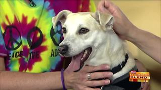 Avoiding Pet Stress During Fireworks and Thunderstorms - Video