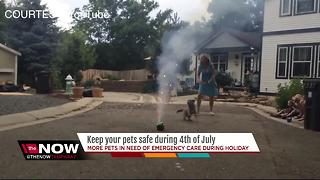 Keep your pets safe during Fourth of July - Video