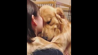 Sweet Golden Retriever just want some hugs