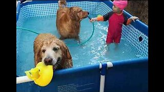 Pool Party: Little Girl Enjoys Paddling With Her Dogs