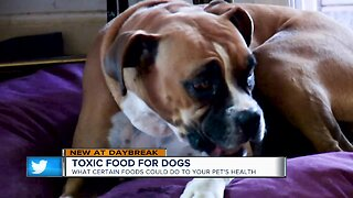 Check out the foods that could harm your pets
