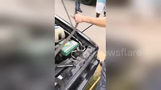 Deadly black mamba snake found inside car engine - Video