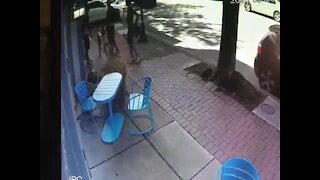 VIDEO: Car drives through Pigtown business storefront