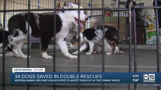 34 dogs saved in several rescues