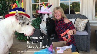 Max and Katie the Great Danes Happy 8th Birthday Celebration  - Video