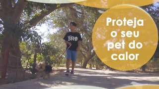 Proteja o seu pet do calor - Video