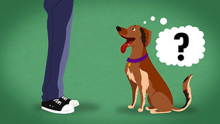 S1 Ep38: Does My Dog Know What I'm Thinking? - Video