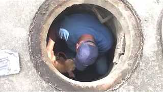 Sewer Rescue | Stray Rescue of St.Louis - Video