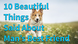 10 Beautiful Things Said About Man's Best Friend - Video