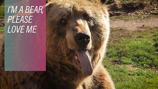 I don't feel like dancing: Kosovo's bears finally free - Video