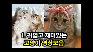 1. cute kittens videos compilation best 10