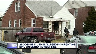 2 in custody after police & MHS bust dog fighting ring in Detroit