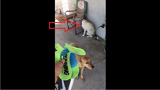 Guilty dog clearly gives herself away - Video