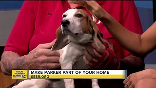 Rescues in Action: Parker