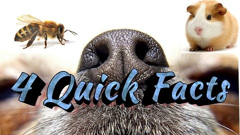 4 quick crazy animal facts that will surprise you