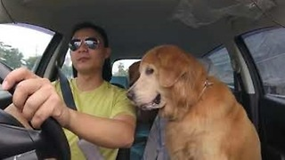 Owner Shares a Burger With His Dogs on the Go - Video