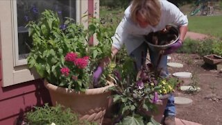 MELINDA'S GARDEN MOMENT - COFFEE GROUNDS IN YOUR COMPOST