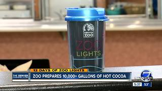 Denver Zoo to prepare 10,000 gallons of hot cocoa - Video