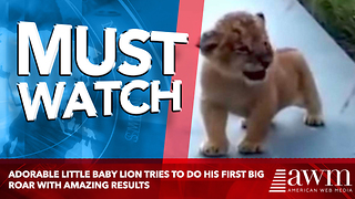 Adorable Little Baby Lion Tries To Do His First Big Roar With Amazing Results - Video